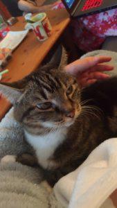 Le chat et le pyjama en pilou