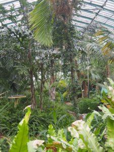 La jungle des serres d'Auteuil