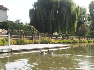 Les oies du canal de l'Ourcq