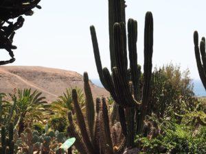 Les cactus de l'Oasis Park de Fuerteventura