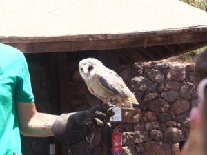 Chouette à l'oasis Park de Fuerteventura