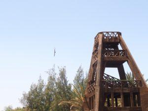 Rapace à l'oasis Park de Fuerteventura