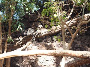 Des singes de l'Oasis Park de Fuerteventura
