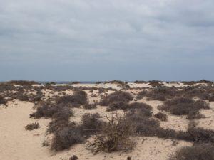 La plage de Corralejo, Fuerteventura