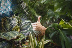 Pouce en l'air dans la jungle