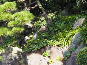 Le jardin impérial de Tokyo