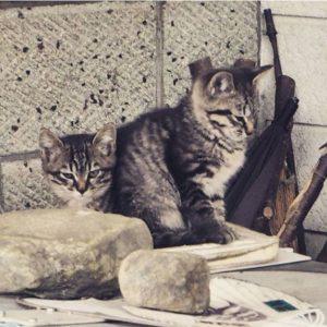 Des chatons au Mont Fuji