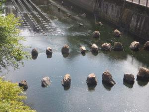 Le canal Meguro à Tokyo