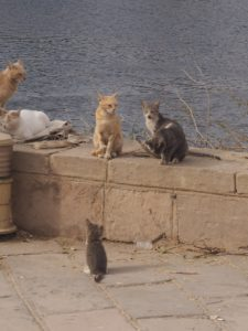 Petits chats d'Egypte