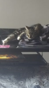 Mon chat dort