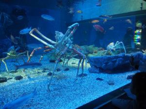 crabes géants à l'aquarium d'Osaka