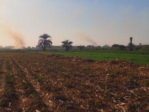 Atterrir dans un champ de canne à sucre