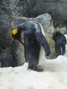 Manchot à l'aquarium d'Osaka