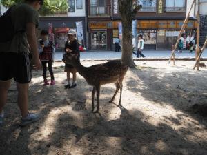 Un daim à Miyajima