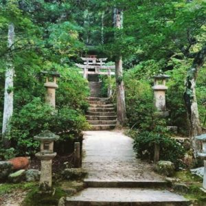 La forêt Momiji