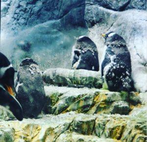 Les pingouins de l'aquarium d'Osaka