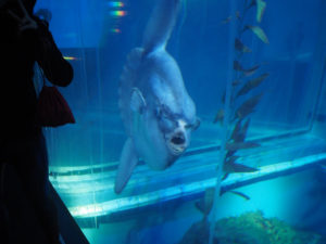 Poisson lune à l'aquarium d'Osaka