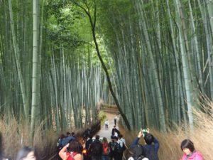 Bambouseraie d'Arashiyama à Kyoto : foule de touristes