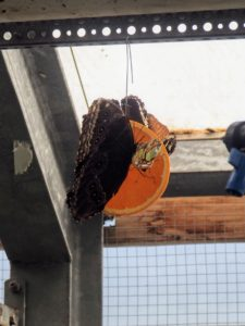 Les papillons de La serre du jardin botanique de Copenhague