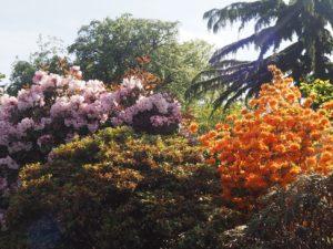 Fleurs du jardin botanique de Copenhague