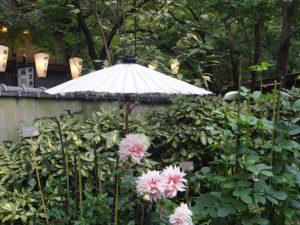 Jardin de dahlias, parc Ueno, Tokyo, Japon