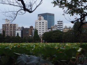 Plantes aquatiques du parc Ueno à Tokyo