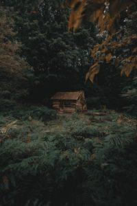 Syndrome de la cabane