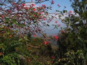Un paysage à Cuba