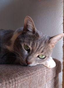 Petit chat déprimé