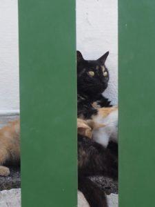 Maman chat et ses petits