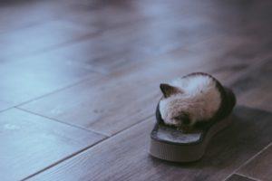 Dormir dans une pantoufle