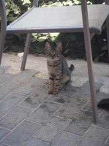Un chaton en Crète