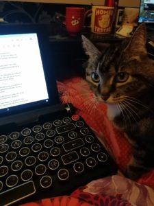 Ecrire avec un petit chat mignon