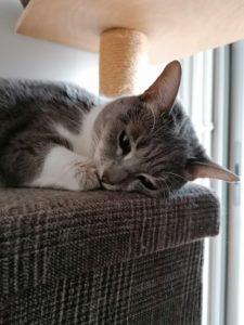 Petit chat trop mignon