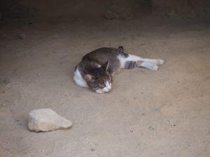 Un petit chat dans les grottes de Matala