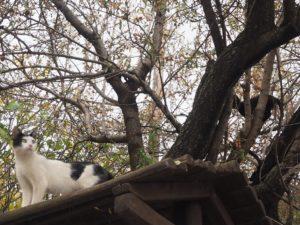 Des chats crétois