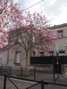 Un beau magnolia