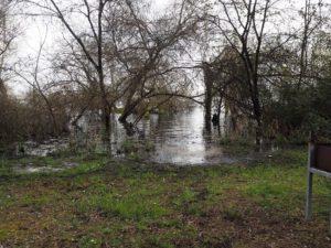 Forêt du lac à Bordeaux