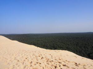 La forêt du Pilat