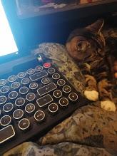 Petit catswriter