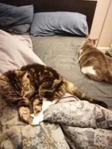 Des petits chats squattent le lit