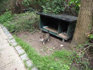 Un petit chat dans le Parc de Belleville