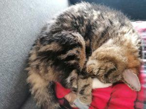 Un chat apaisé